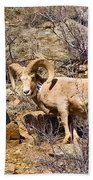 Huge Bighorn Beach Towel