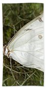 Huge White Morpho Butterfly Beach Towel