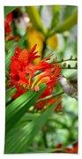 Hummingbird Among The Lucifer Beach Towel