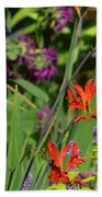 Hummingbird And Crocosmia Lucifer Beach Towel