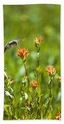 Hummingbird And Paintbrush Flower Beach Sheet