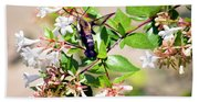 Hummingbird Clearwing Moth Beach Towel