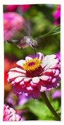 Hummingbird Flight Beach Towel by Garry Gay
