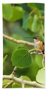 Hummingbird In Tree Beach Towel