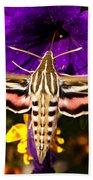 Hummingbird Moth   #8645 Beach Towel