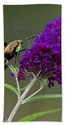 Hummingbird Moth Iv Beach Towel