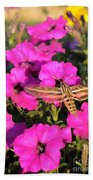 Hummingbird Moth Beach Towel