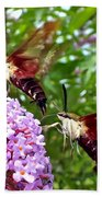Hummingbird Moths Beach Towel