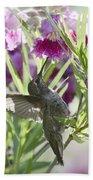 Hummingbird On A Desert Willow Beach Towel