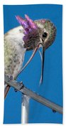 Hummingbird Yawn With Tongue Beach Towel