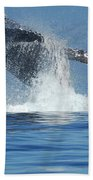 Humpback Whale Breaching Beach Towel by Bob Christopher