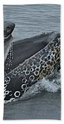 Humpback Whale  Lunge Feeding 2013 In Monterey Bay Beach Towel