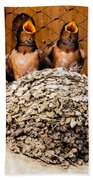Hungry Baby Swallows - Antelope Island - Utah Beach Towel