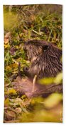 Hungry Beaver Beach Towel