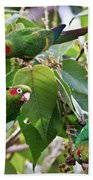 Hungry Chiriqui Conures Beach Towel