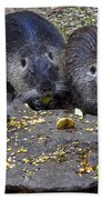 Hungry Critters Beach Towel