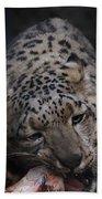 Hungry Leopard Beach Towel