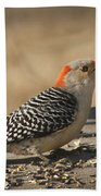 Hungry Red-bellied Woodpecker - Melanerpes Carolinus Beach Towel