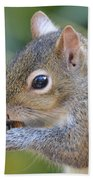 Hungry Squirrel Beach Towel