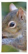 Hungry Squirrel Beach Sheet