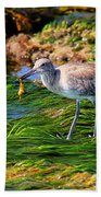 Hungry Willet Beach Towel
