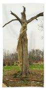 Hurricane Katrina Resurrection Tree Beach Towel