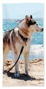Husky On The Beach Beach Towel