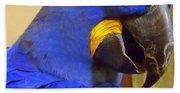 Hyacinth Macaw Portrait Beach Towel