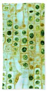 Hyacinth Root Tip Cells Beach Towel