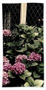 Hydrangea Blossoms Beach Towel