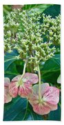 Hydrangea With A New Look Beach Towel