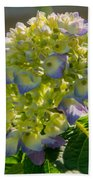 Hydrangeas First Blush Beach Towel