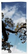 I Touch The Sky Beach Towel by Laurie Search