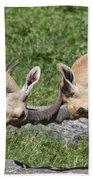 Ibex Doing Battle Beach Towel