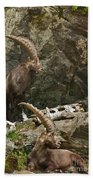 Ibex Pictures 112 Beach Towel