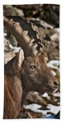 Ibex Pictures 160 Beach Towel