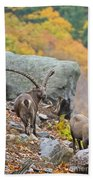 Ibex Pictures 174 Beach Towel