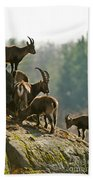 Ibex Pictures 176 Beach Towel