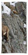 Ibex Pictures 183 Beach Towel
