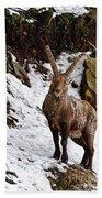Ibex Pictures 22 Beach Towel