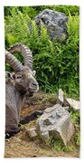 Ibex Pictures 64 Beach Towel