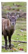 Ibex Pictures 71 Beach Towel