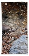 Ibex Pictures 134 Beach Towel