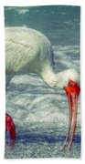 Ibis Feeding Beach Towel