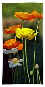 Iceland Poppies In The Sun Beach Towel