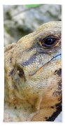 Iguana Of The Uxmal Pyramids In Yucatan Mexico Beach Towel