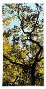 Illuminated Oak Tree Beach Towel