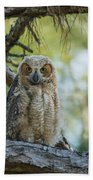 Immature Great Horned Owl Beach Towel