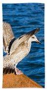 Immature Herring Gull At The Harbour Beach Towel