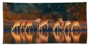 Impala Herd With Reflections In Water Beach Towel